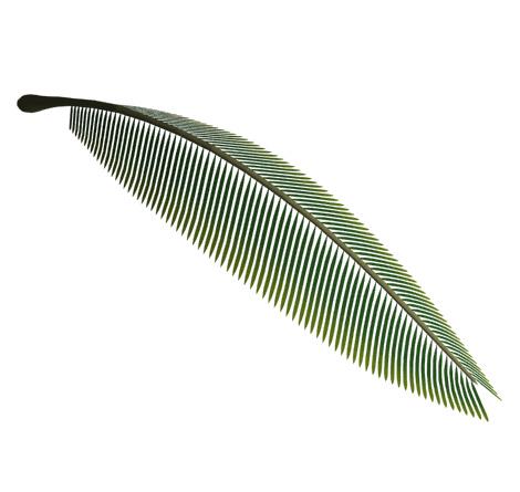 椰子の枝葉(その他の3DCG)